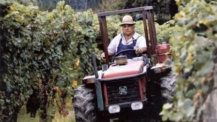 Vineyard labour